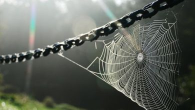 Photo of تفسير رؤية العنكبوت في المنام